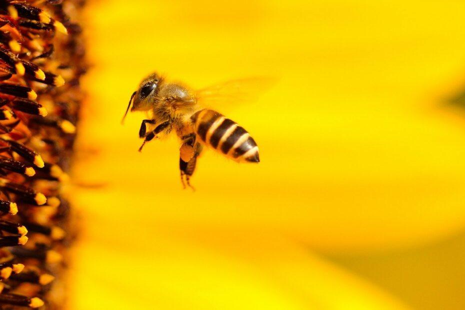 biene-in-sonnenblume-nachhaltigkeit
